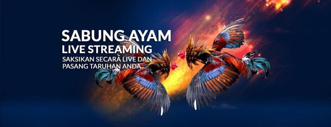 Situs Bandar Sabung Ayam Online SV388 Terbesar se Asia